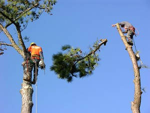 tree trimming in Jacksonville, FL