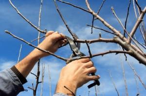 tree maintenance | Jacksonville, FL